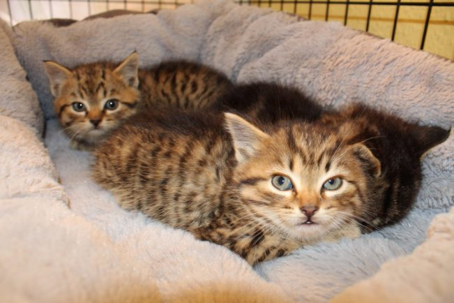 Kittens found hiding in Dogs Trust rehoming centre