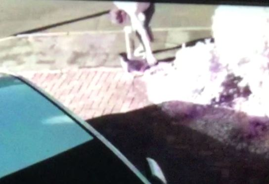 Appeal launched to find man who threw cat into the air by its tail