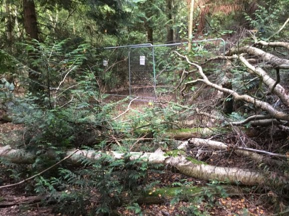 Concerns work has begun to cut down Cubbington woodland to make way for HS2 – despite announcement it would be safe for now