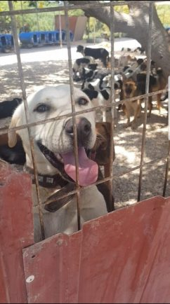 """Vet helping tackle """"massive problem"""" of Cyprus' stray animals"""