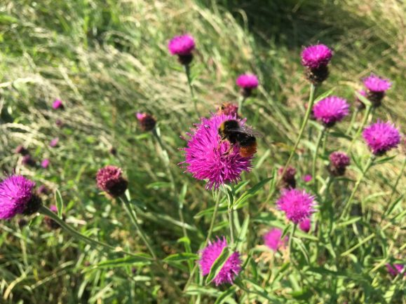 Rugby's green spaces praised for increasing biodiversity