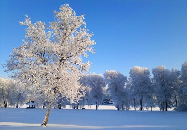 Predicted cold snap prompts good neighbour plea