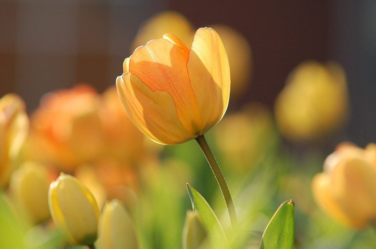 Spring photography tips to help you capture the beauty of the season