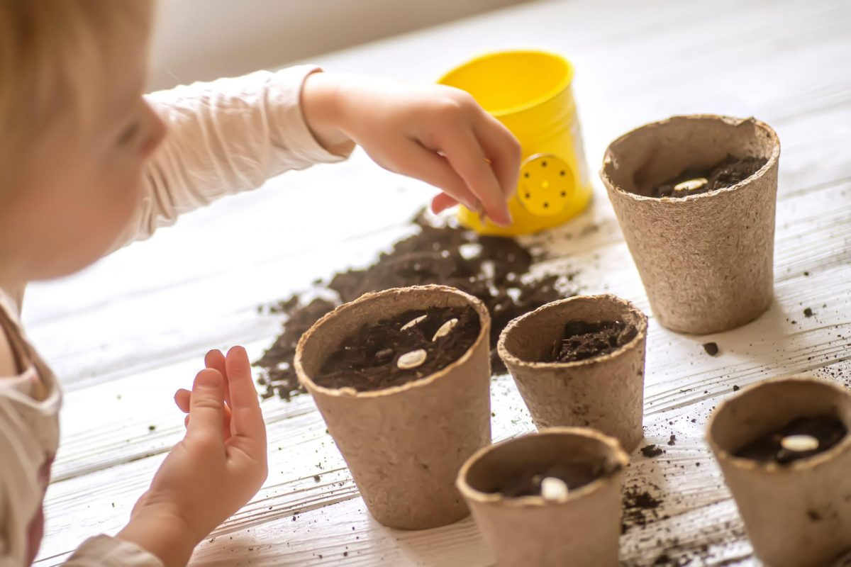 Gardening Time: Kids will love sowing these seeds in the garden